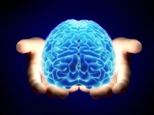 脳と認知機能