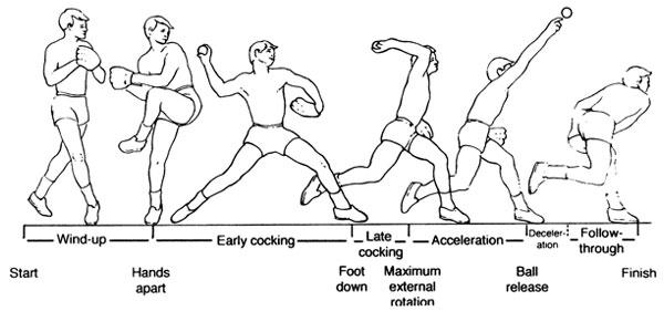 投球動作のフェーズ